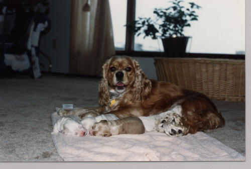 Lady with pups.jpg